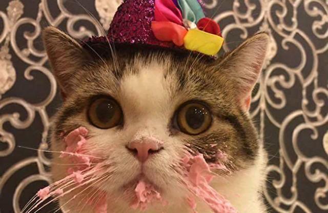 день рождения hostiq