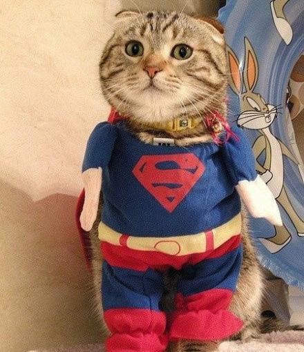 Картинки супер кот смешные, картинка днем рождения